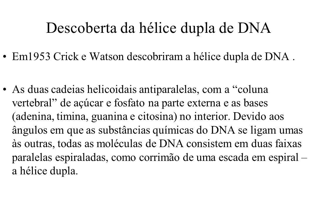Descoberta da hélice dupla de DNA Em1953 Crick e Watson descobriram a hélice dupla de DNA. As duas cadeias helicoidais antiparalelas, com a coluna ver