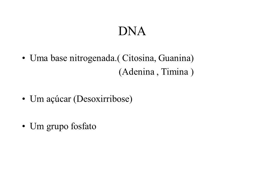 DNA Uma base nitrogenada.( Citosina, Guanina) (Adenina, Timina ) Um açúcar (Desoxirribose) Um grupo fosfato