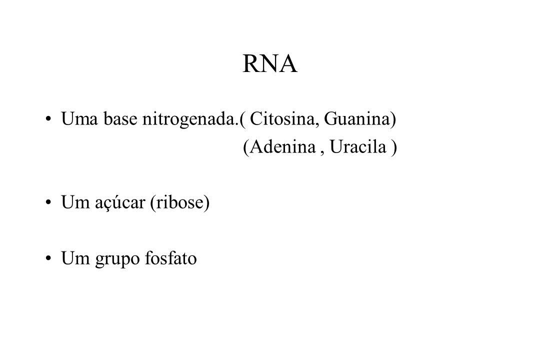 RNA Uma base nitrogenada.( Citosina, Guanina) (Adenina, Uracila ) Um açúcar (ribose) Um grupo fosfato