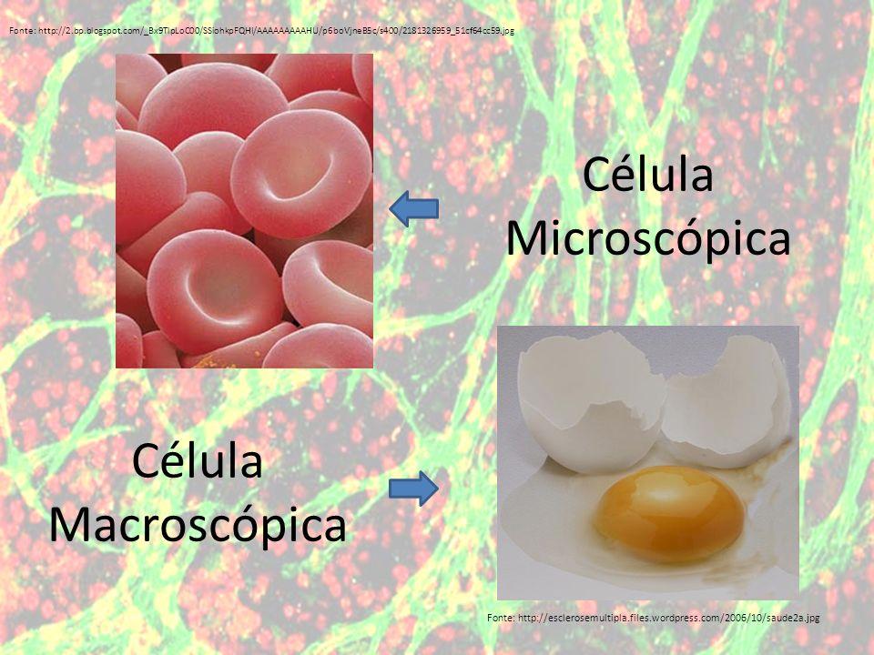 Célula Microscópica Fonte: http://esclerosemultipla.files.wordpress.com/2006/10/saude2a.jpg Fonte: http://2.bp.blogspot.com/_Bx9TlpLoC00/SSiohkpFQHI/A