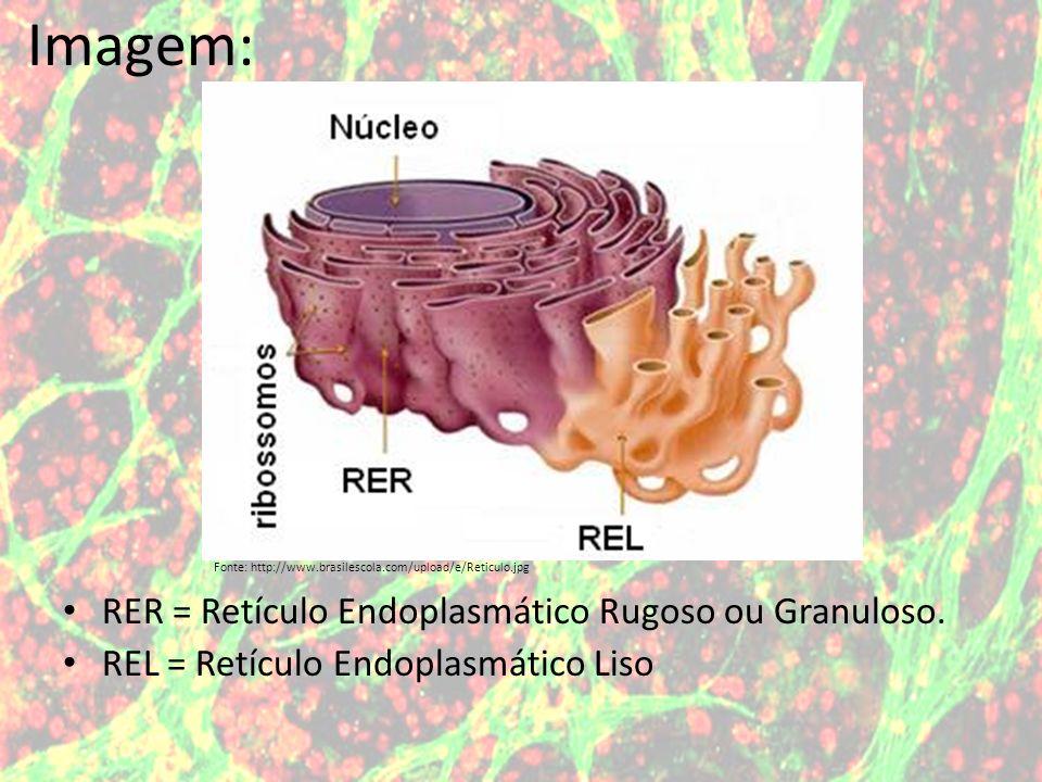 RER = Retículo Endoplasmático Rugoso ou Granuloso. REL = Retículo Endoplasmático Liso Fonte: http://www.brasilescola.com/upload/e/Reticulo.jpg Imagem: