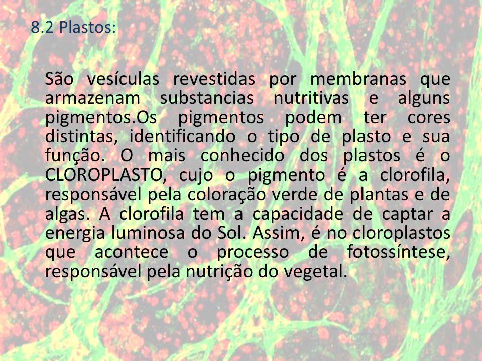 São vesículas revestidas por membranas que armazenam substancias nutritivas e alguns pigmentos.Os pigmentos podem ter cores distintas, identificando o