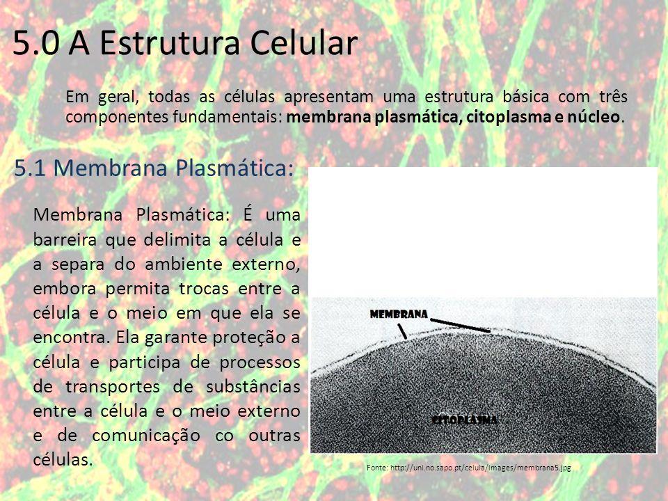 Em geral, todas as células apresentam uma estrutura básica com três componentes fundamentais: membrana plasmática, citoplasma e núcleo. 5.0 A Estrutur