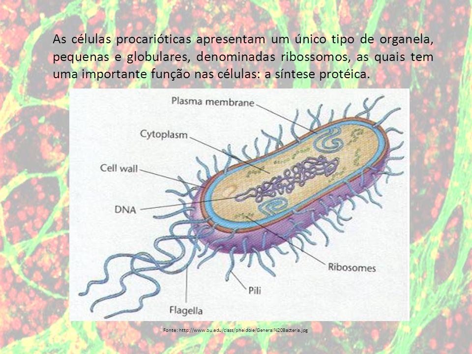 Os organismos que apresentam células cujo o núcleo é delimitado pela carioteca são denominados de eucarióticos.