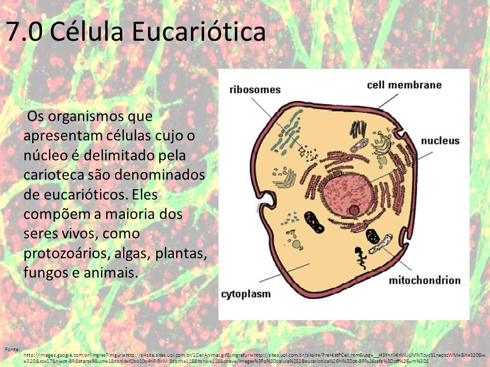 Como podemos observar, além da membrana citoplasmática e do núcleo, há muitas estruturas no citoplasma da célula eucariótica.