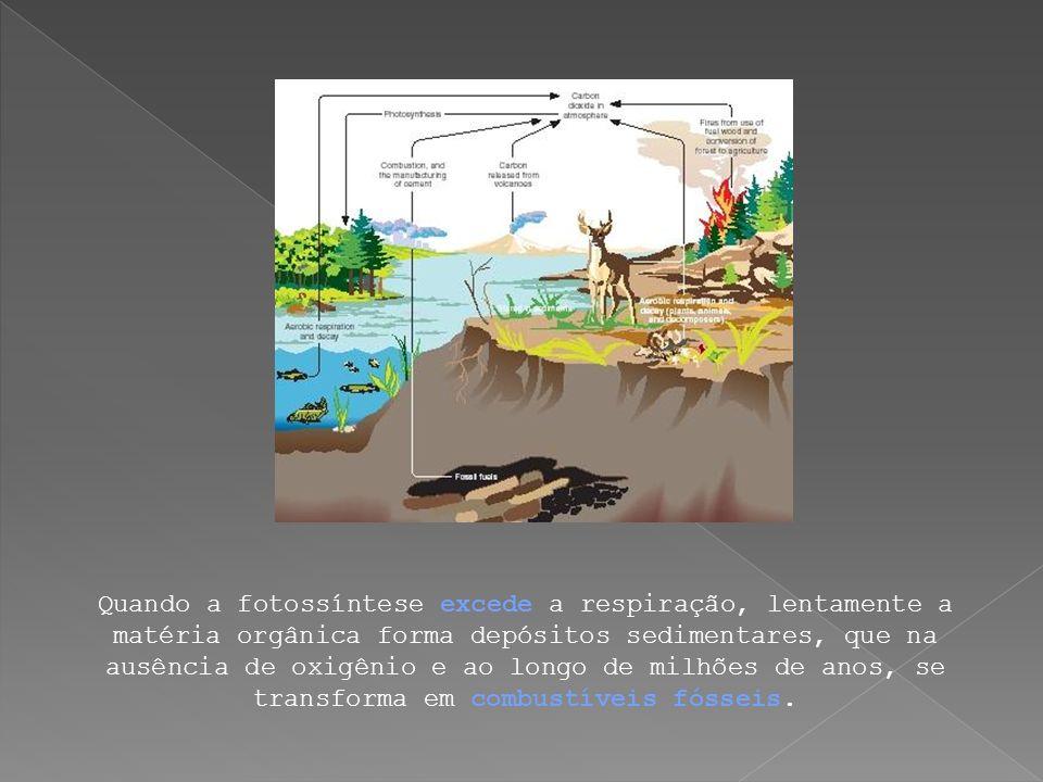 Quando a fotossíntese excede a respiração, lentamente a matéria orgânica forma depósitos sedimentares, que na ausência de oxigênio e ao longo de milhõ