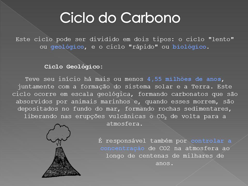 O ciclo biológico do carbono é relativamente rápido: estima- se que a renovação do carbono atmosférico ocorre a cada 20 anos.