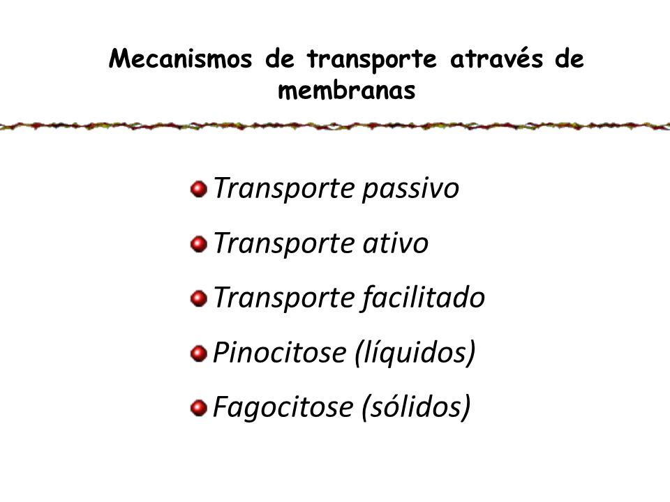 Mecanismos de transporte através de membranas Transporte passivo Transporte ativo Transporte facilitado Pinocitose (líquidos) Fagocitose (sólidos)