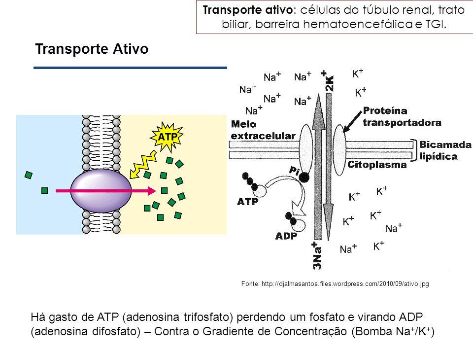 Transporte Ativo Há gasto de ATP (adenosina trifosfato) perdendo um fosfato e virando ADP (adenosina difosfato) – Contra o Gradiente de Concentração (
