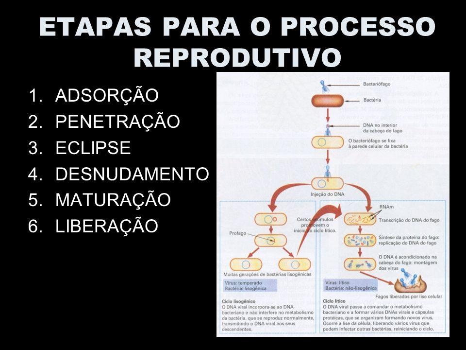 ETAPAS PARA O PROCESSO REPRODUTIVO 1.ADSORÇÃO 2.PENETRAÇÃO 3.ECLIPSE 4.DESNUDAMENTO 5.MATURAÇÃO 6.LIBERAÇÃO