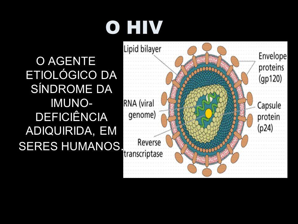 O HIV O AGENTE ETIOLÓGICO DA SÍNDROME DA IMUNO- DEFICIÊNCIA ADIQUIRIDA, EM SERES HUMANOS.