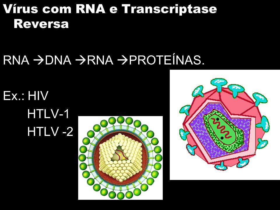 Vírus com RNA e Transcriptase Reversa RNA DNA RNA PROTEÍNAS. Ex.: HIV HTLV-1 HTLV -2