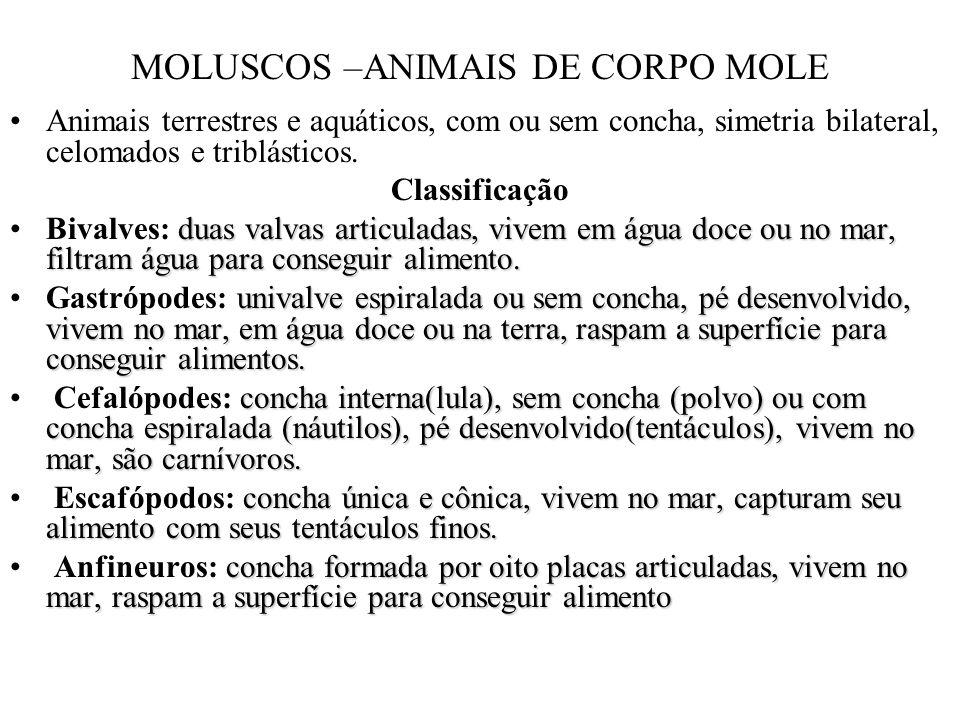 MOLUSCOS –ANIMAIS DE CORPO MOLE Animais terrestres e aquáticos, com ou sem concha, simetria bilateral, celomados e triblásticos. Classificação duas va