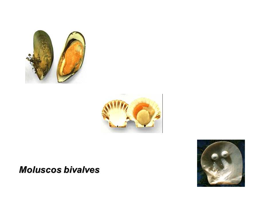 Moluscos gastrópodes