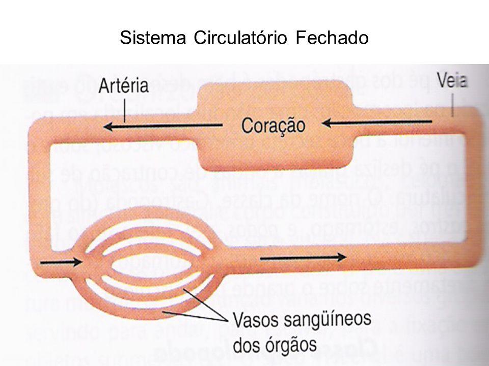 Sistema respiratório Presente.Trocas gasosas por meio de brânquias.