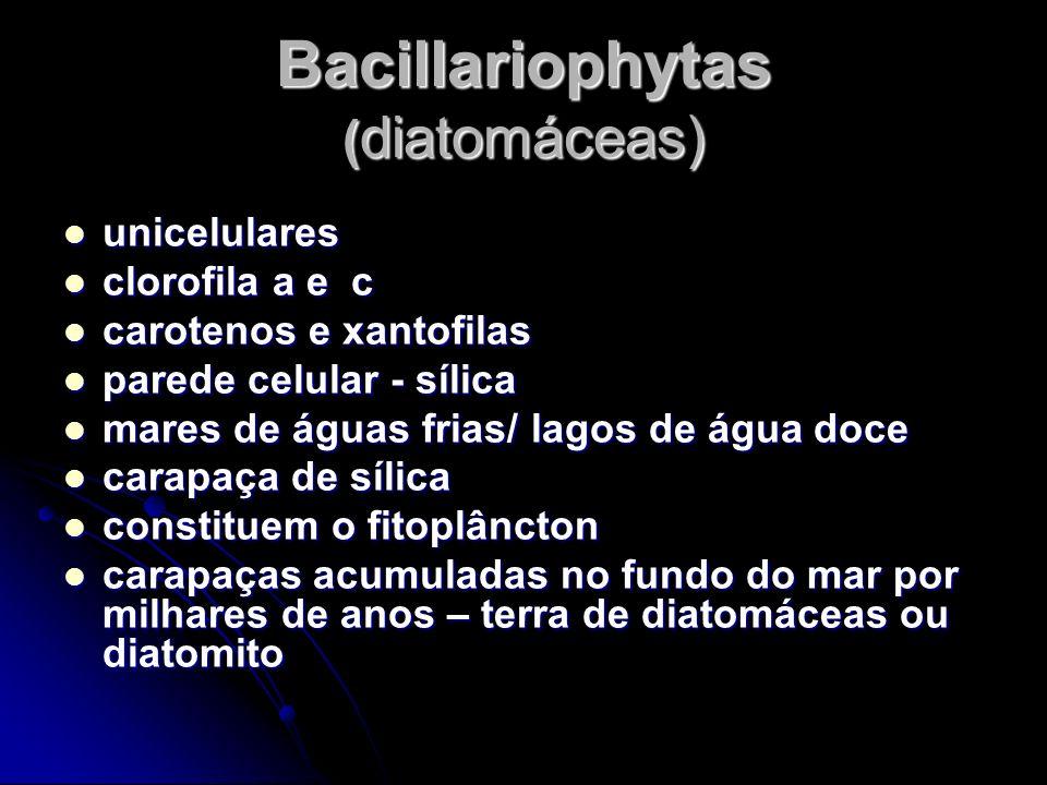 Bacillariophytas ( diatomáceas) unicelulares unicelulares clorofila a e c clorofila a e c carotenos e xantofilas carotenos e xantofilas parede celular