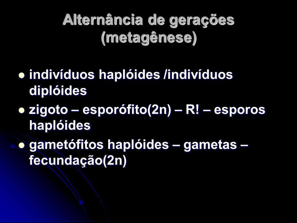 Alternância de gerações (metagênese) indivíduos haplóides /indivíduos diplóides indivíduos haplóides /indivíduos diplóides zigoto – esporófito(2n) – R