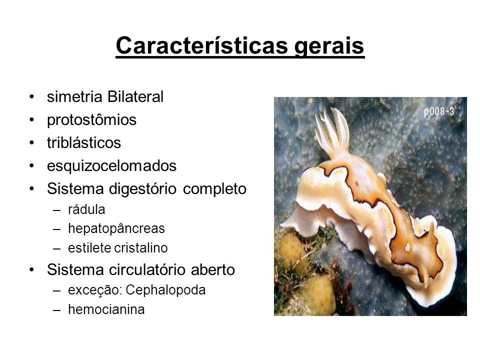 Características gerais simetria Bilateral protostômios triblásticos esquizocelomados Sistema digestório completo –rádula –hepatopâncreas –estilete cri