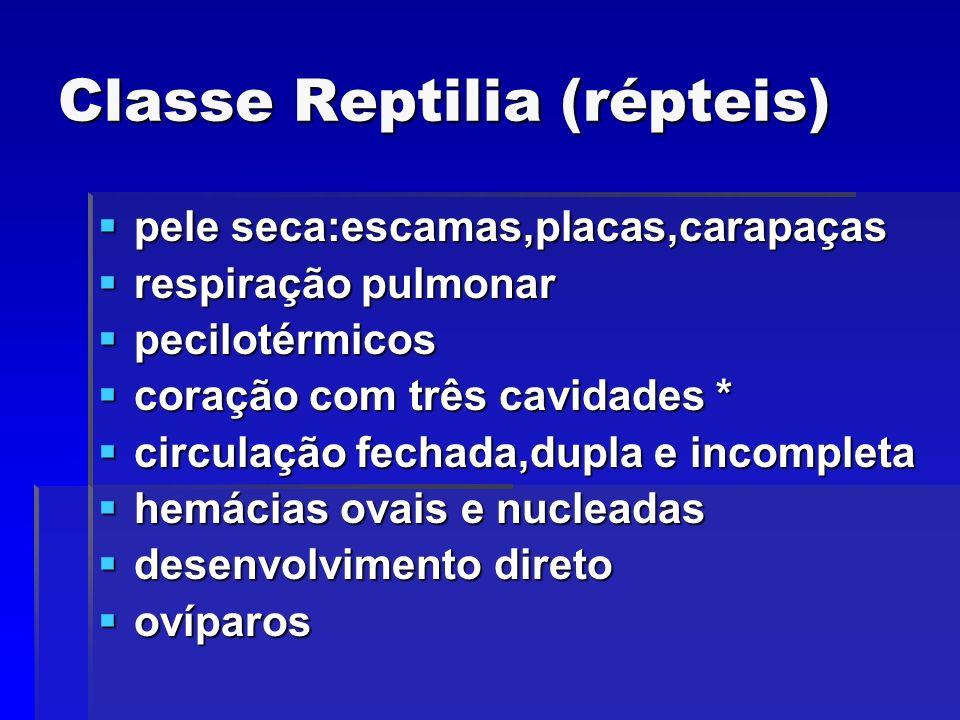 Classe Reptilia (répteis) pele seca:escamas,placas,carapaças pele seca:escamas,placas,carapaças respiração pulmonar respiração pulmonar pecilotérmicos