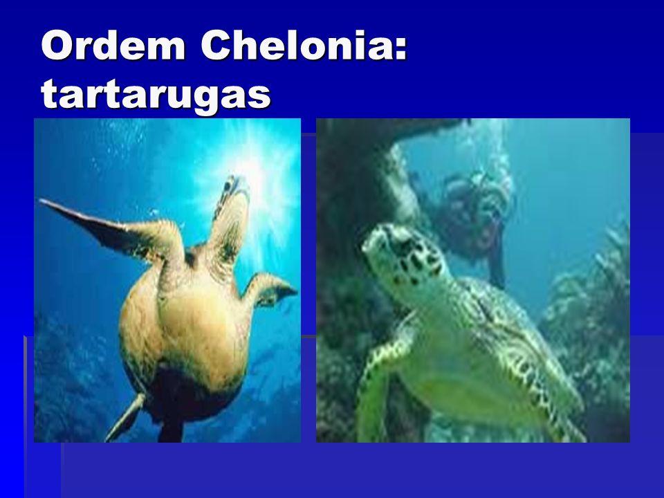 Ordem Chelonia: tartarugas