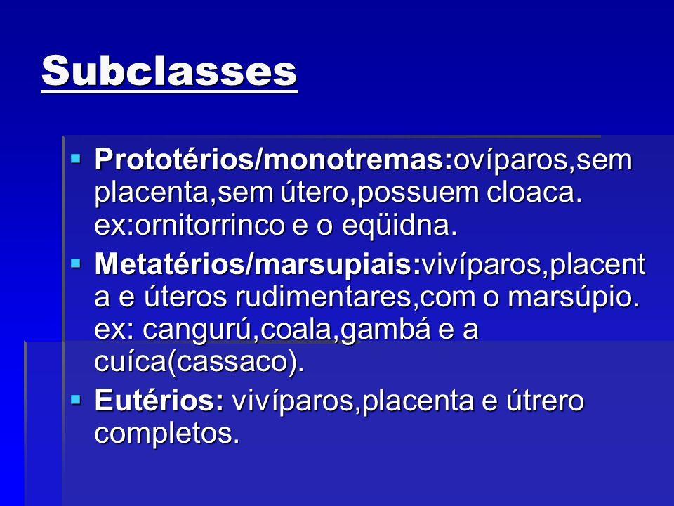Subclasses Prototérios/monotremas:ovíparos,sem placenta,sem útero,possuem cloaca. ex:ornitorrinco e o eqüidna. Prototérios/monotremas:ovíparos,sem pla