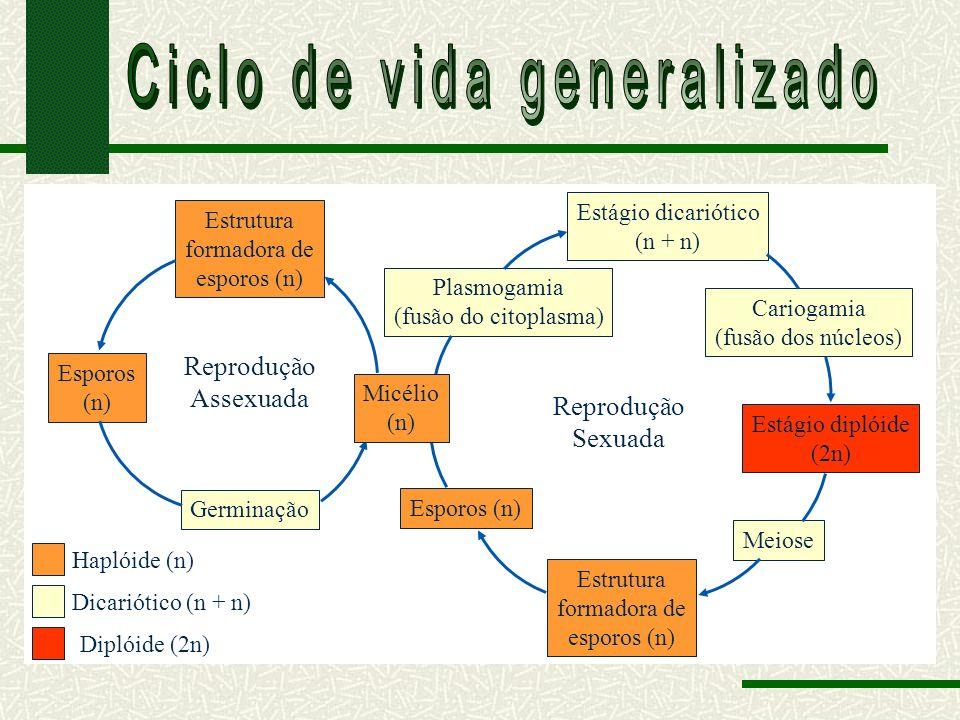 Haplóide (n) Dicariótico (n + n) Diplóide (2n) Estrutura formadora de esporos (n) Esporos (n) Germinação Plasmogamia (fusão do citoplasma) Estágio dicariótico (n + n) Cariogamia (fusão dos núcleos) Estágio diplóide (2n) Meiose Estrutura formadora de esporos (n) Esporos (n) Reprodução Assexuada Reprodução Sexuada Micélio (n)
