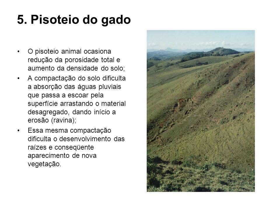 5. Pisoteio do gado O pisoteio animal ocasiona redução da porosidade total e aumento da densidade do solo; A compactação do solo dificulta a absorção