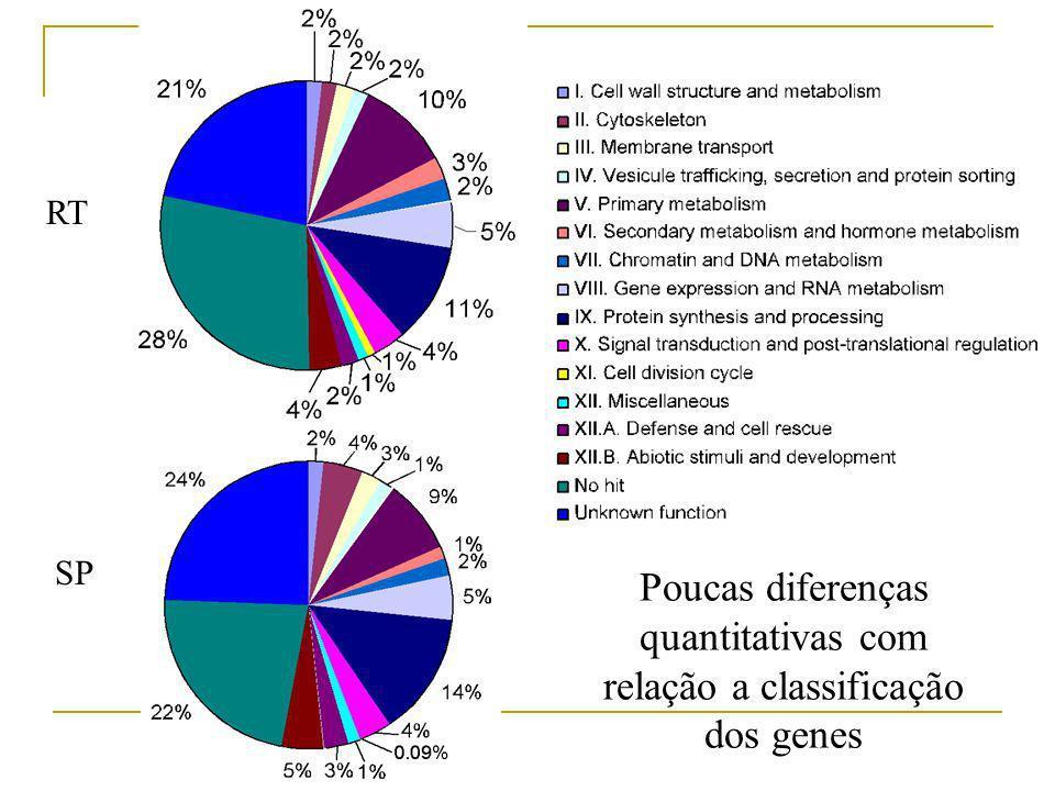 RT SP Poucas diferenças quantitativas com relação a classificação dos genes