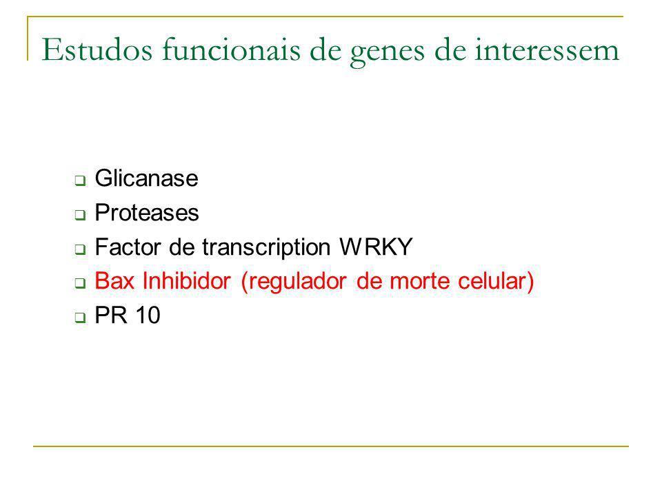 Estudos funcionais de genes de interessem Glicanase Proteases Factor de transcription WRKY Bax Inhibidor (regulador de morte celular) PR 10