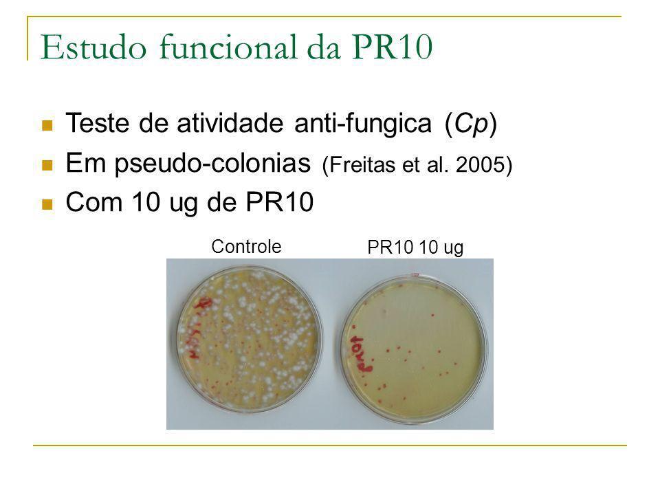 Estudo funcional da PR10 Teste de atividade anti-fungica (Cp) Em pseudo-colonias (Freitas et al. 2005) Com 10 ug de PR10 Controle PR10 10 ug