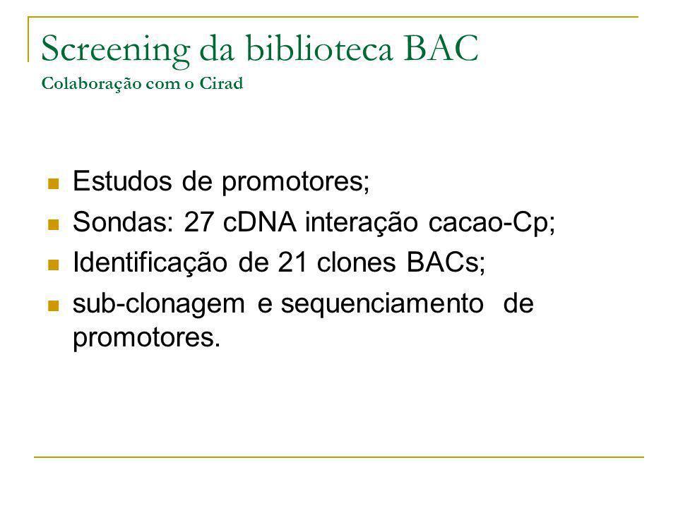 Screening da biblioteca BAC Colaboração com o Cirad Estudos de promotores; Sondas: 27 cDNA interação cacao-Cp; Identificação de 21 clones BACs; sub-cl