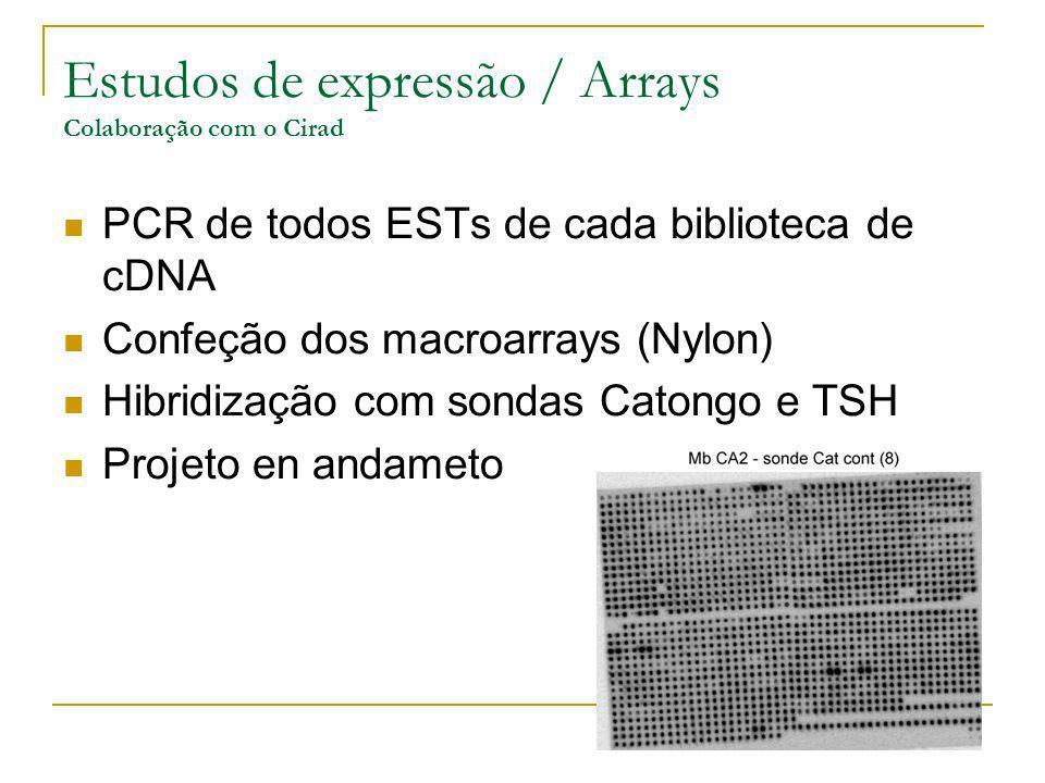Estudos de expressão / Arrays Colaboração com o Cirad PCR de todos ESTs de cada biblioteca de cDNA Confeção dos macroarrays (Nylon) Hibridização com s