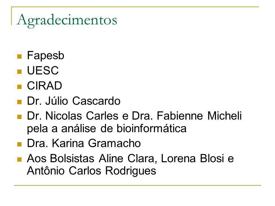Agradecimentos Fapesb UESC CIRAD Dr. Júlio Cascardo Dr. Nicolas Carles e Dra. Fabienne Micheli pela a análise de bioinformática Dra. Karina Gramacho A