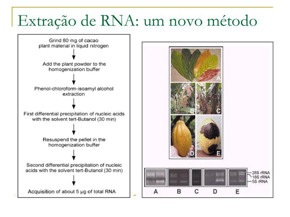 Extração de RNA de cacau rRNA 5S rRNA 18S rRNA 28S RNA extraído dos diferentes pontos de coletas de TSH e Catongo Pool de RNA 24h, 48h, 72hCada 5 DAI 70 dias PlantioInoculação (30d) 0
