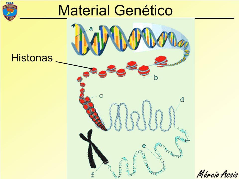 Márcio Assis Material Genético Histonas