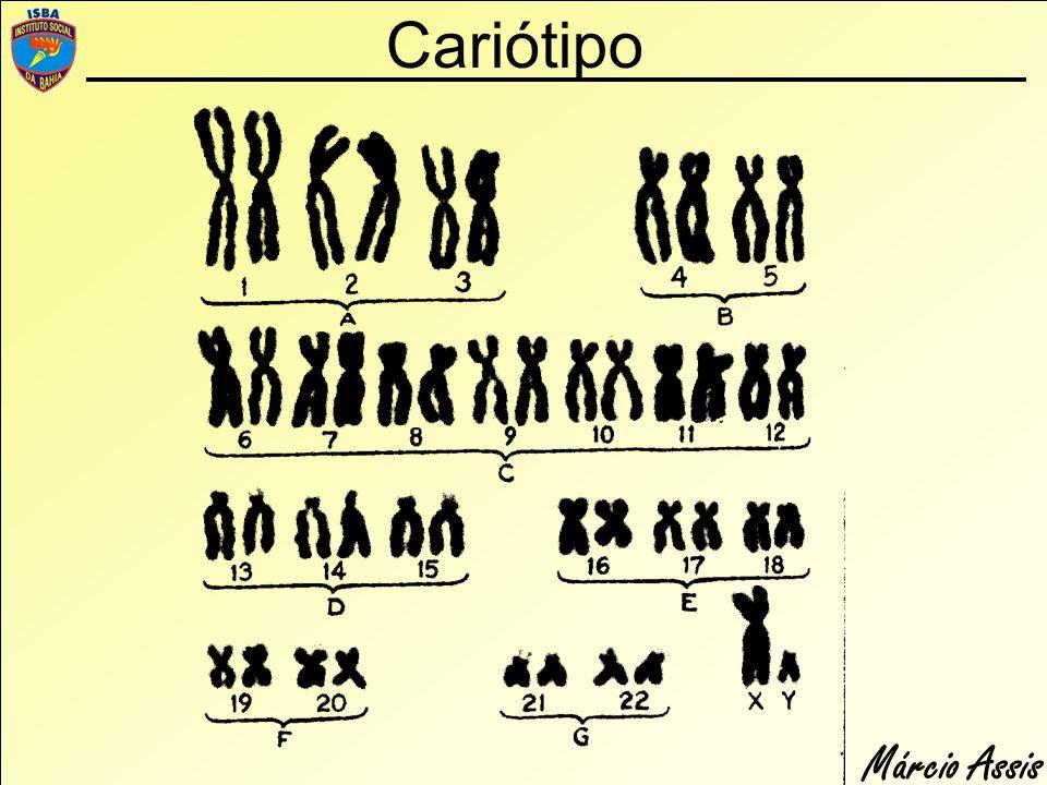 Márcio Assis Cariótipo