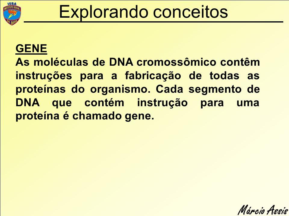 Márcio Assis Explorando conceitos GENE As moléculas de DNA cromossômico contêm instruções para a fabricação de todas as proteínas do organismo. Cada s