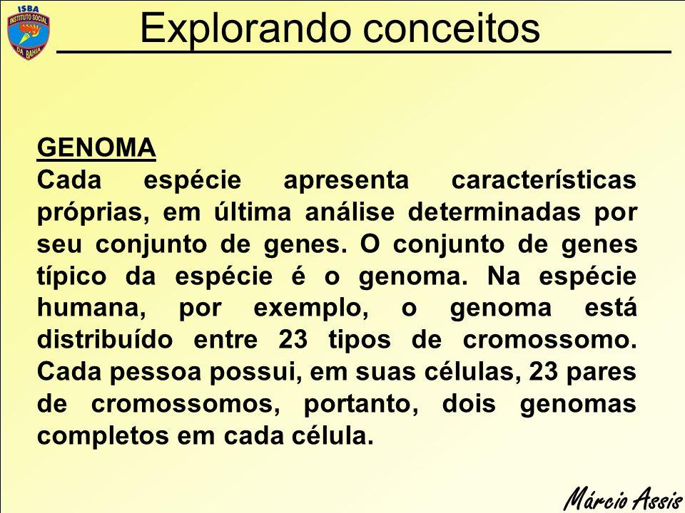 Márcio Assis Explorando conceitos GENOMA Cada espécie apresenta características próprias, em última análise determinadas por seu conjunto de genes. O