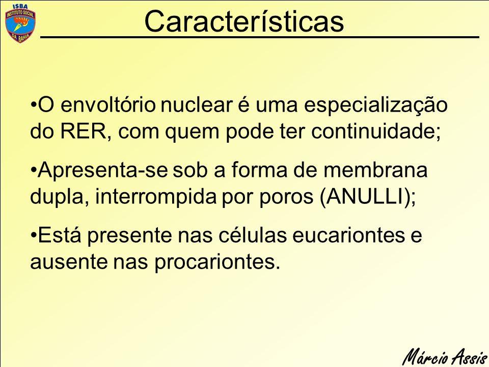 Márcio Assis Características O envoltório nuclear é uma especialização do RER, com quem pode ter continuidade; Apresenta-se sob a forma de membrana du