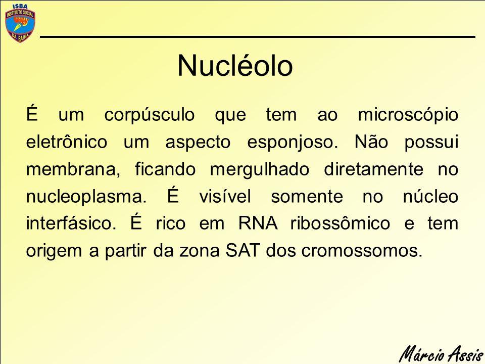 Márcio Assis É um corpúsculo que tem ao microscópio eletrônico um aspecto esponjoso. Não possui membrana, ficando mergulhado diretamente no nucleoplas