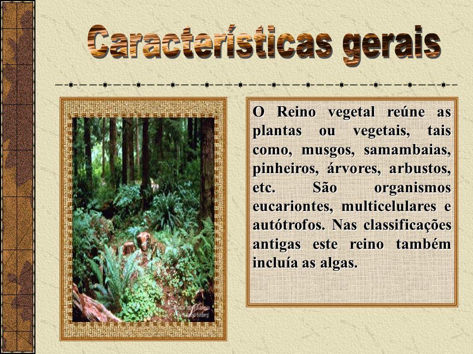 O Reino vegetal reúne as plantas ou vegetais, tais como, musgos, samambaias, pinheiros, árvores, arbustos, etc. São organismos eucariontes, multicelul