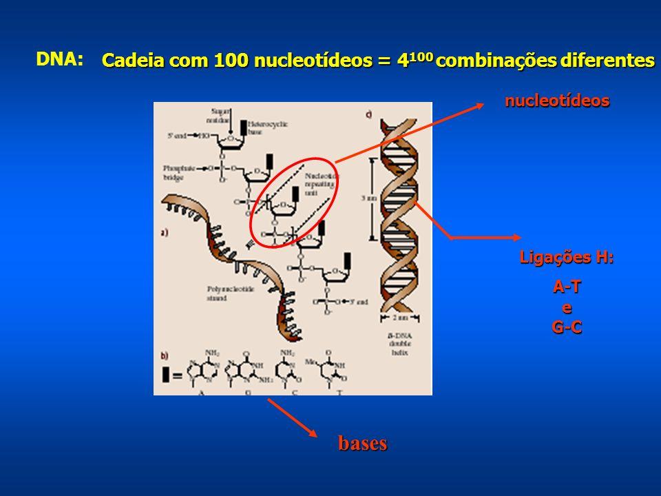 Ligações H: A-TeG-C nucleotídeos bases bases DNA: Cadeia com 100 nucleotídeos = 4 100 combinações diferentes