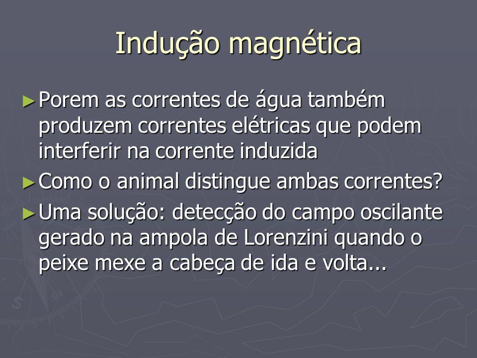Indução magnética Porem as correntes de água também produzem correntes elétricas que podem interferir na corrente induzida Porem as correntes de água