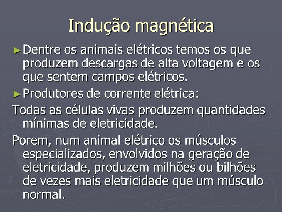 Indução magnética Dentre os animais elétricos temos os que produzem descargas de alta voltagem e os que sentem campos elétricos. Dentre os animais elé