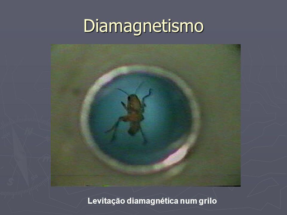 Diamagnetismo Levitação diamagnética num grilo
