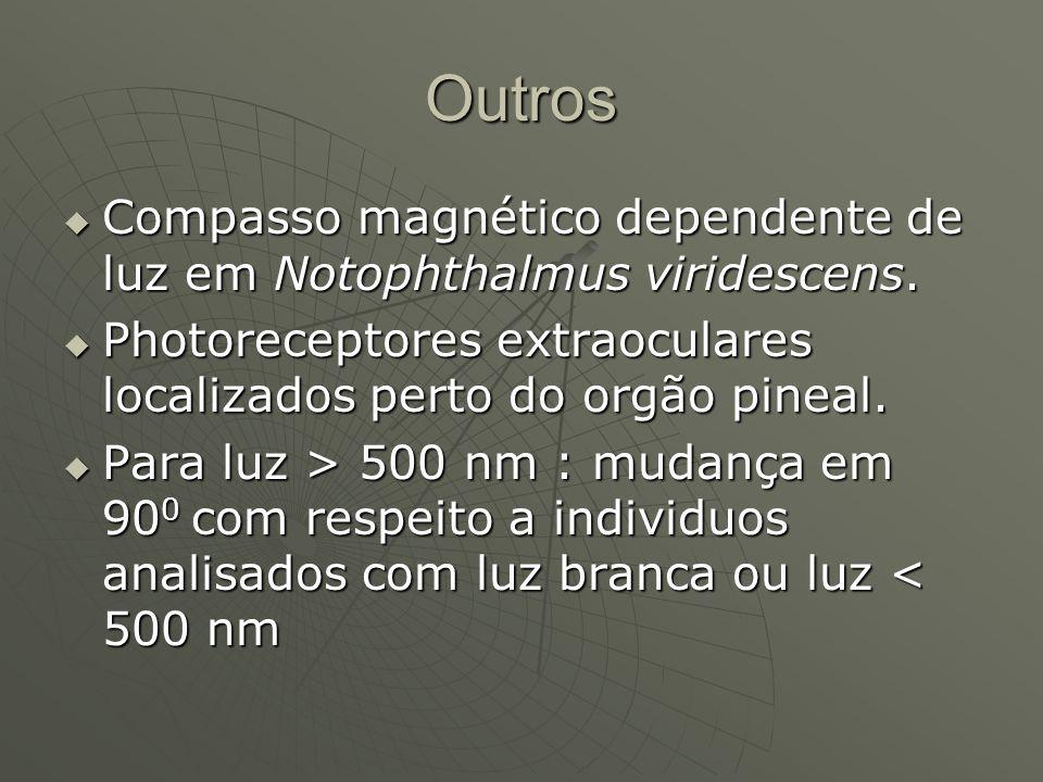 Outros Compasso magnético dependente de luz em Notophthalmus viridescens. Compasso magnético dependente de luz em Notophthalmus viridescens. Photorece