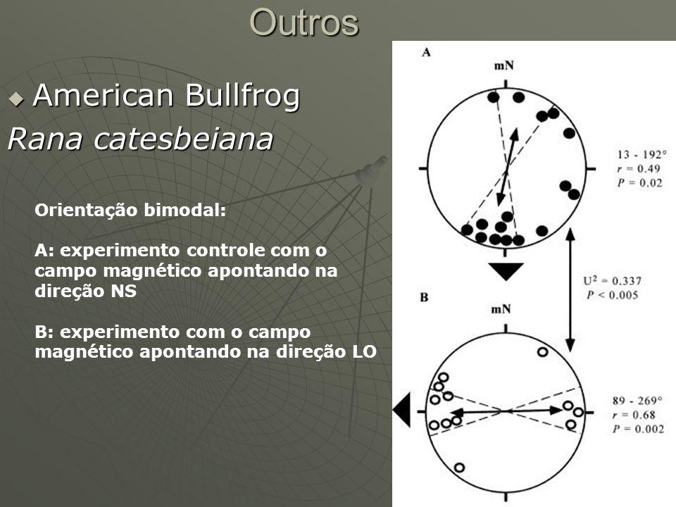 Outros American Bullfrog American Bullfrog Rana catesbeiana Orientação bimodal: A: experimento controle com o campo magnético apontando na direção NS