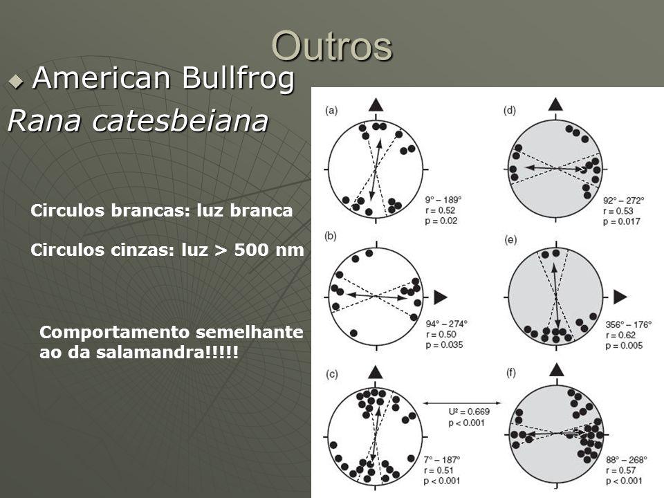 Outros American Bullfrog American Bullfrog Rana catesbeiana Circulos brancas: luz branca Circulos cinzas: luz > 500 nm Comportamento semelhante ao da