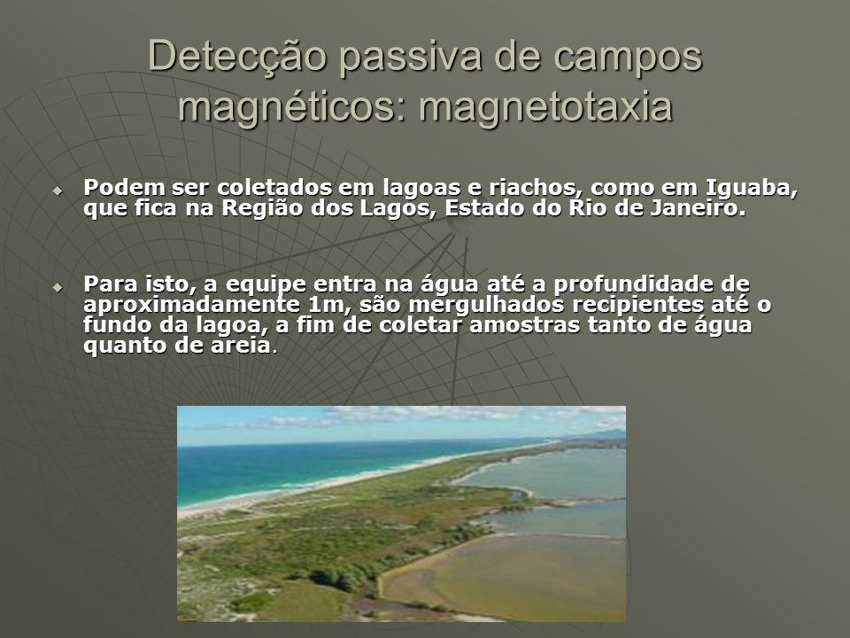 Podem ser coletados em lagoas e riachos, como em Iguaba, que fica na Região dos Lagos, Estado do Rio de Janeiro. Podem ser coletados em lagoas e riach