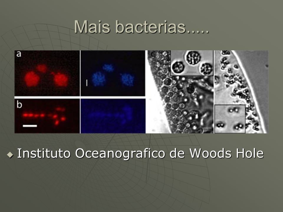 Mais bacterias..... Instituto Oceanografico de Woods Hole Instituto Oceanografico de Woods Hole
